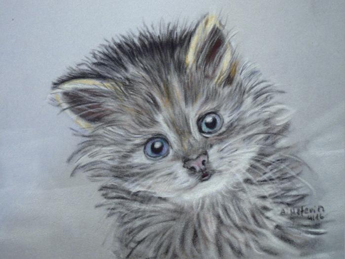 Katze 2 Kreide auf Velourpapier
