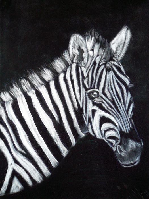 Zebra Kreide auf Velourpapier