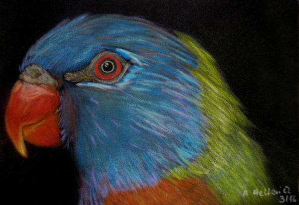 Papagei in Kreide